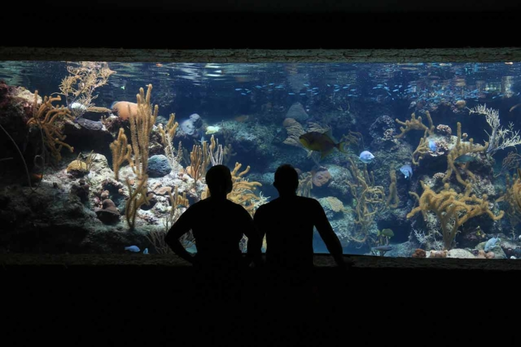 "Woods Hole Science Aquarium is a family-oriented museum that offers popular ""touch"" pools"