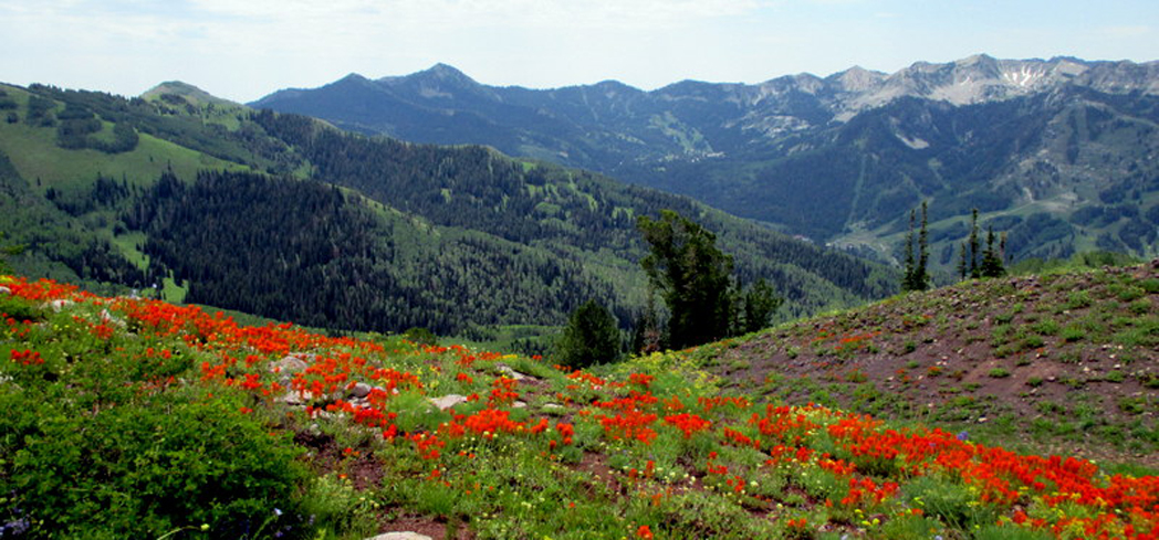 Take a Guided Hike with Mountain Vista Touring, which offers individualized summer hikes