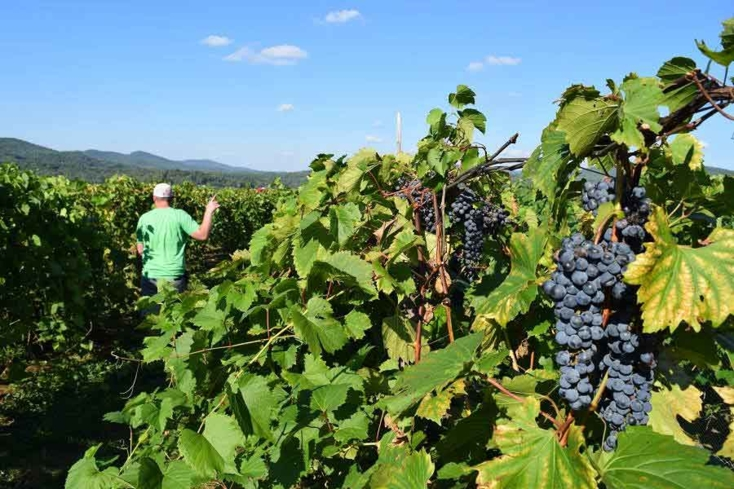 Sample wines and tour the vineyard at Boyden Valley Winery & Spirits