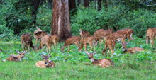 A herd of deer at the Rajiv Gandhi National Park